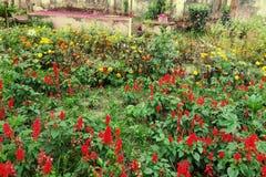 在孟加拉国花园 免版税库存图片