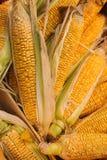 在季节性秋季农夫` s市场上的未加工的有机玉米 图库摄影