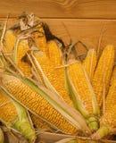 在季节性秋季农夫` s市场上的未加工的有机玉米 免版税库存图片