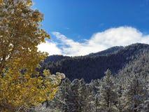在季节第一雪盖的秋天树  免版税库存图片