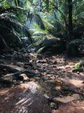 在季风季节的美好的森林图象 库存照片