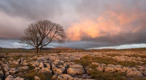 在孤立树,约克夏山谷的日落 免版税库存照片