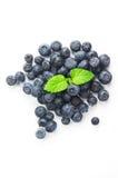 在孤立白色背景的蓝莓 库存图片