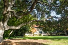 在学生俱乐部房子前面的大小橡树树在学院校园里 库存图片