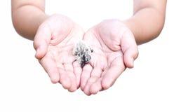 在孩子的幼鸟是手 免版税库存照片