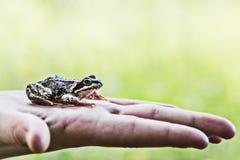 在孩子的手上的一只青蛙 免版税图库摄影