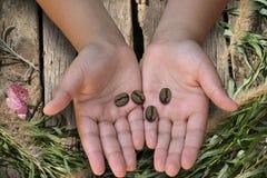 在孩子的手是咖啡豆,葡萄酒 库存图片