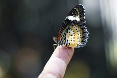 在孩子` s手指的蝴蝶 库存图片