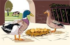 在孵化的鸭子 库存照片