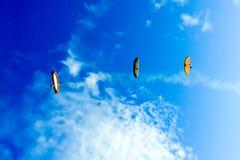 在宁顺省的滑翔伞 库存图片
