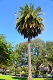 在它所有它强大的棕榈树 免版税库存照片