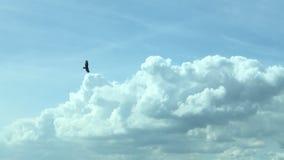 在它的元素的鹰 图库摄影