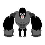 在它的后腿的恼怒的大猩猩 在白色backg的积极的猴子 库存图片