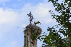 在它的巢的Alsacian Ciconia在教会 免版税图库摄影