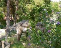 在它的巢附近的恐龙用鸡蛋 在Dinopark 免版税图库摄影