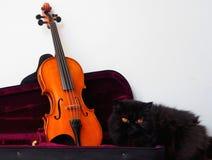 在它的情况的小提琴与一只黑波斯猫 免版税库存照片