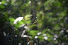 在它的网中间的蜘蛛 图库摄影