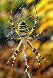 在它的网的黄色蜘蛛 免版税库存图片