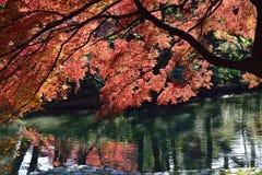 在它的高峰颜色的东京秋天 免版税库存照片