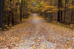 在安大略加拿大巨型橡树的秋天颜色 免版税库存照片