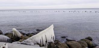 在安大略湖海岸线的冰川覆盖的漂流木头 免版税库存照片