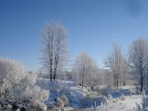 在安大略的冷淡的早晨 免版税库存照片