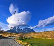 在安第斯秃鹰上谷飞行群  免版税库存图片