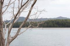 在安达曼海的海岸的干燥树 免版税库存照片