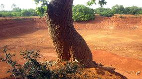 在完全干池塘旁边的树 免版税库存图片