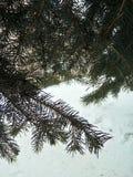 在宏指令的圣诞树分支 免版税库存照片