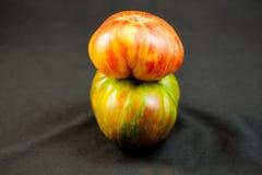 在宏指令的自然祖传遗物蕃茄 库存图片