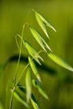在宏指令的麦子 免版税库存照片