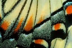 在宏指令的Swallowtail蝴蝶 免版税库存图片
