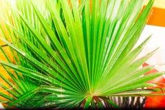 在宏观图片的热带棕榈叶与抽象线 免版税库存图片