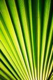 在宏观图片的热带棕榈叶与抽象线 库存图片