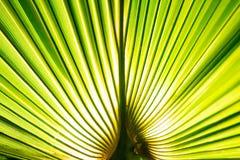 在宏观图片的热带棕榈叶与抽象线 图库摄影