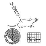 在实验室实验的老鼠 图库摄影