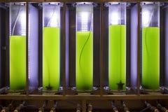 在实验室海藻燃料生物燃料产业的Photobioreactor 图库摄影