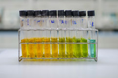 在实验室的试管架 免版税库存图片