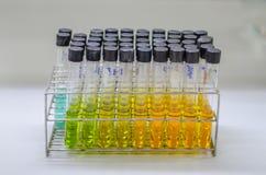 在实验室的试管架 免版税库存照片
