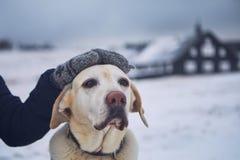 在宠物所有者和他的狗之间的友谊 免版税库存图片
