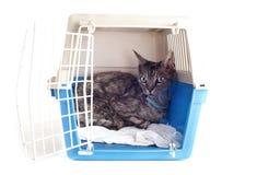 在宠物载体的猫 免版税库存图片