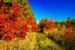 在客人的金黄秋天来了到森林 库存图片