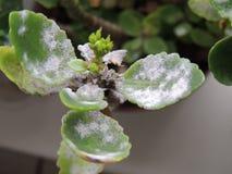 在室内植物的叶子的模子 库存图片