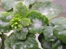 在室内植物的叶子的模子 免版税库存图片
