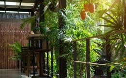 在室内装修的绿色庭院座位 库存图片