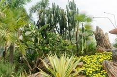 在室外庭院设计的仙人掌 库存照片