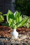 在室外白色的花瓶的开花的铃兰 免版税图库摄影