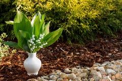 在室外白色的花瓶的开花的铃兰 免版税库存照片