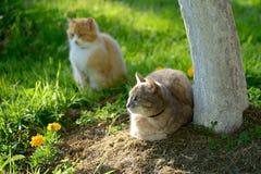 在室外的猫 免版税库存照片